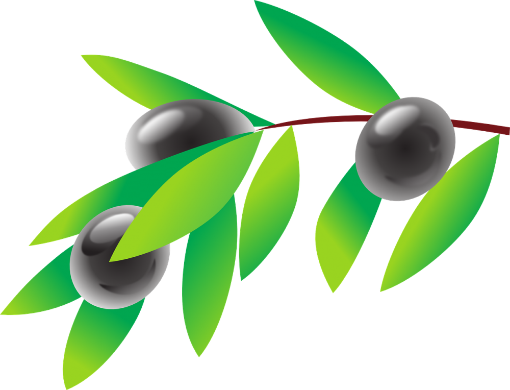 olive-42906_1280
