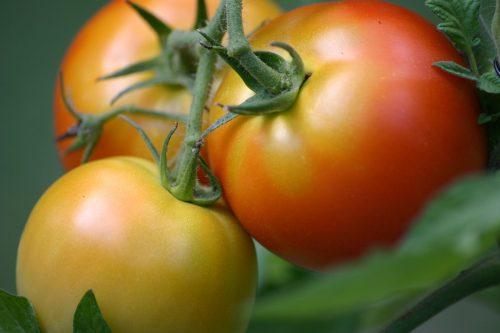 nutrición-nutrition-alimentación-saludable-alimentación-sana-healthy-eats-healthy-eating-vida-sana-healthy-living